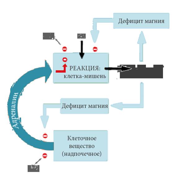 Le cercle vicieux du stress_ru